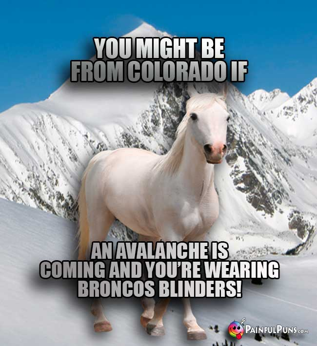 Horse says: You might be from Colorado if an avalance is coming and you're wearing Broncos blinders!