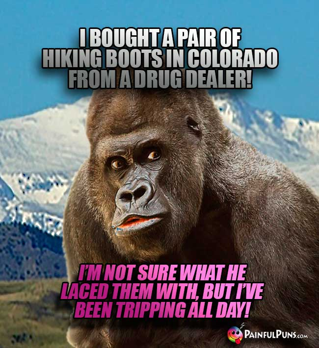 Ape says: I bought a pair of hiking boots in Colorado from a drug dealer! I'm not sure what he laced them with, but I've been tripping all day!