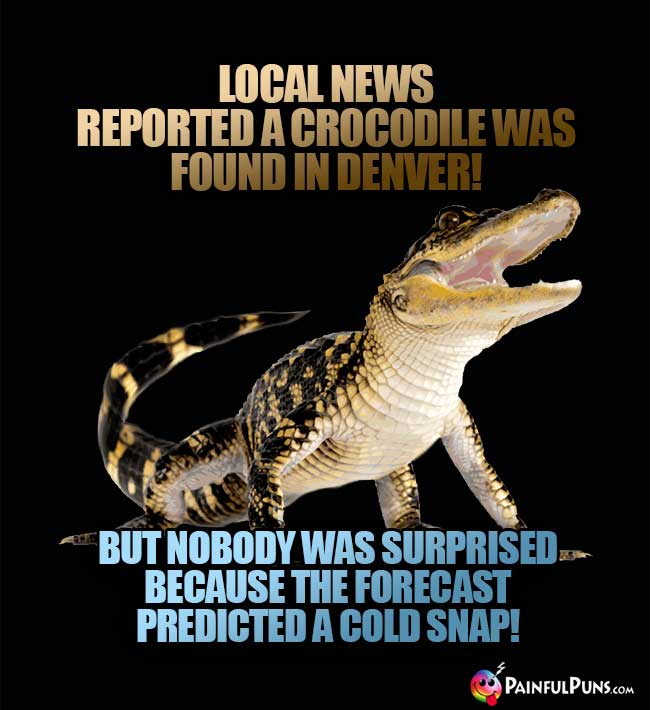 Local news reported a crocodile was found in Denver! But nobody was surprised because the forecast predicted a cold snap!
