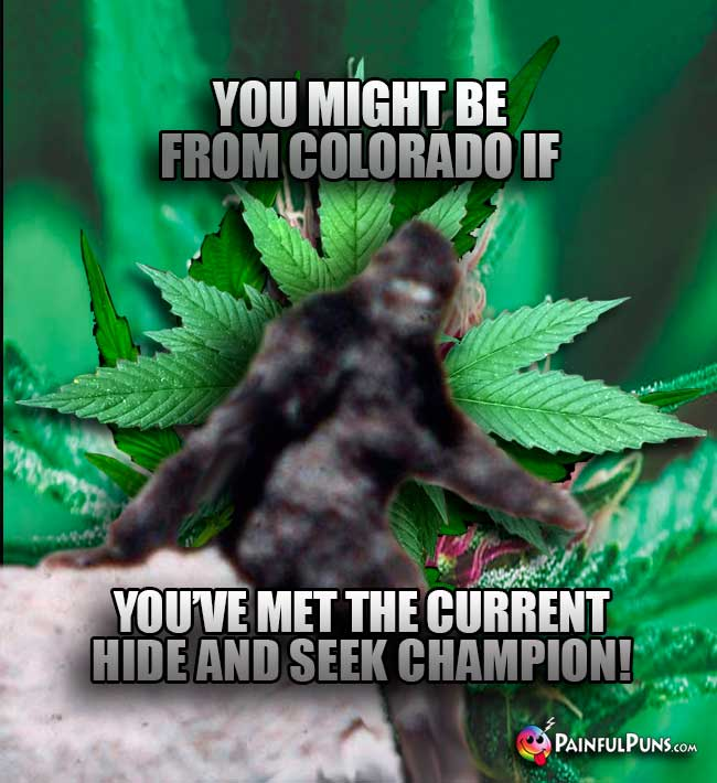Bigfoot says: You might be from Colorado if you've met the current hide and seek champion!