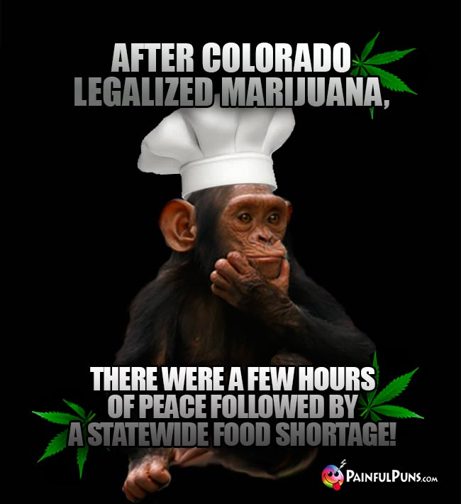 Chimp chef says: After Colorado legalized marijuana, there were a few hours of peace followed by a statewide food shortage!