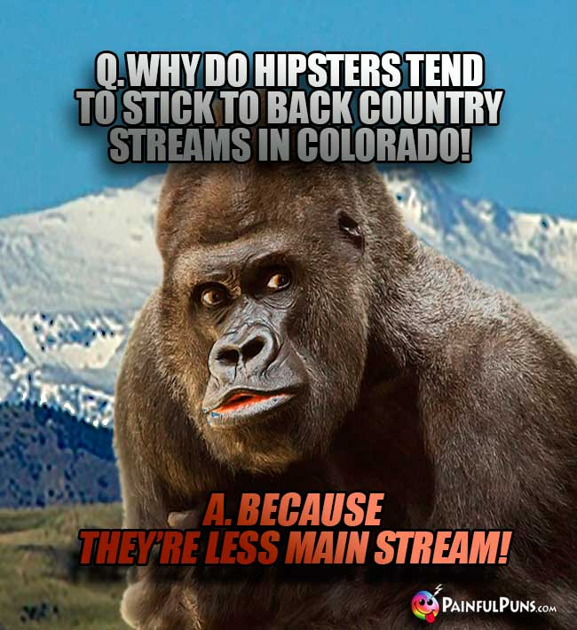 Q. Why do hipsters tend to stick to back country streams in Colorado? A. Because they're less main stream!