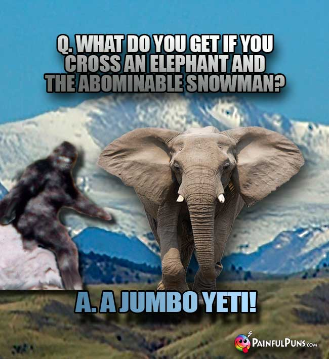 Q. What do you get if you cross an elephant and the abominable snowman? A. A Jumbo Yeti!