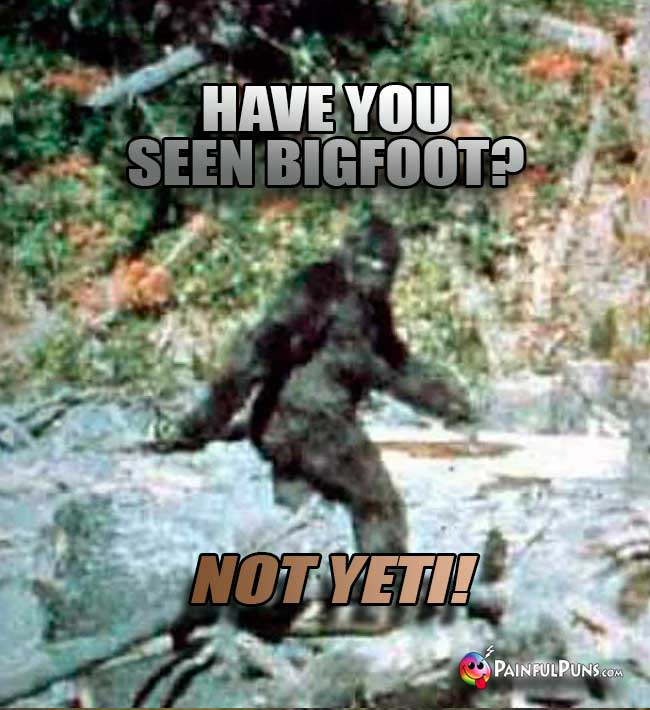 Q. Have you seen Bigfoot? A. Not Yeti!