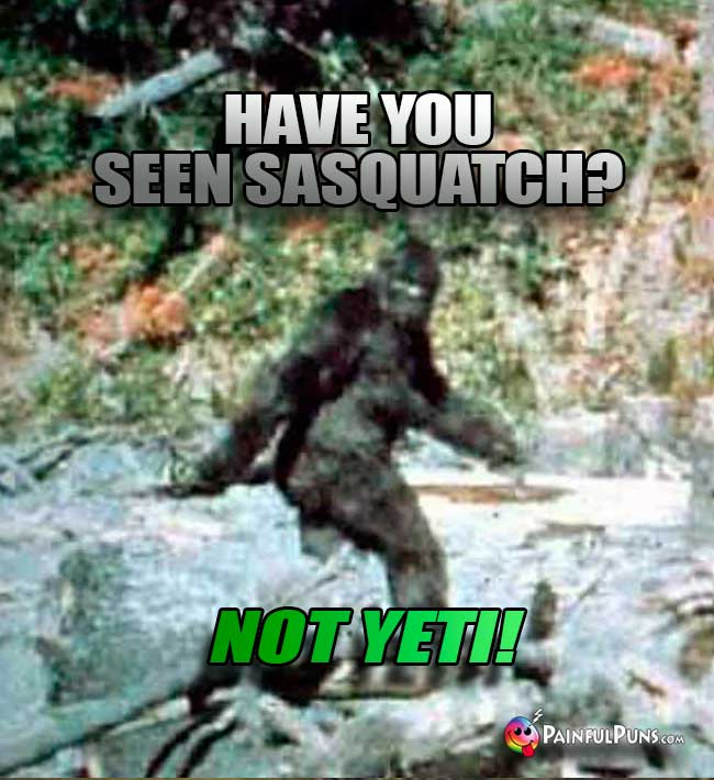 Q. Have you seen Sasquatch? A. Not Yeti!
