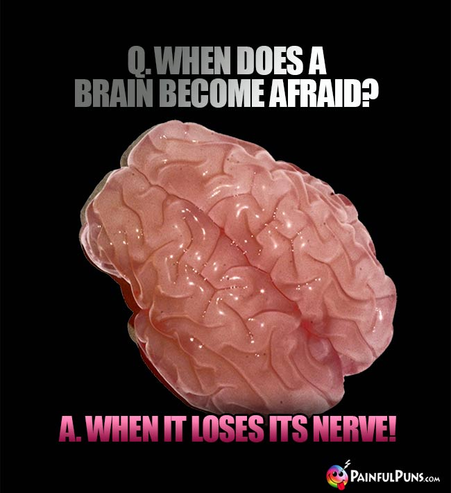 Q. When does a brain become afraid A. When it loses its nerve!