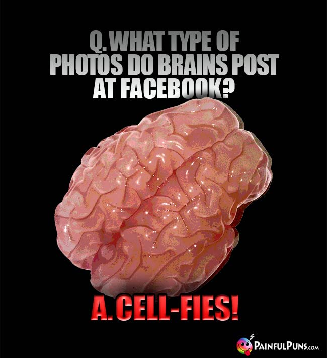 q. What type of photos do brains post at Facebook? A. Cell-fies!