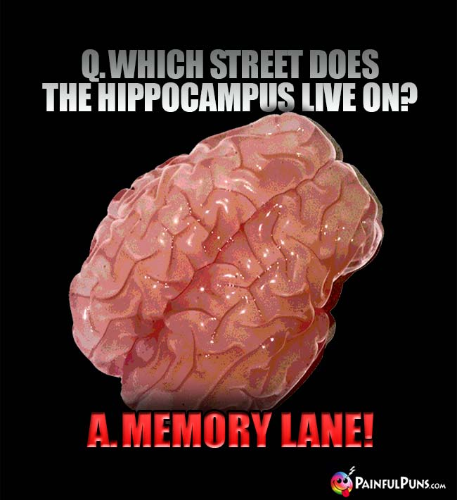 Q. Which street does the hippocampus live on? A. Memory Lane!