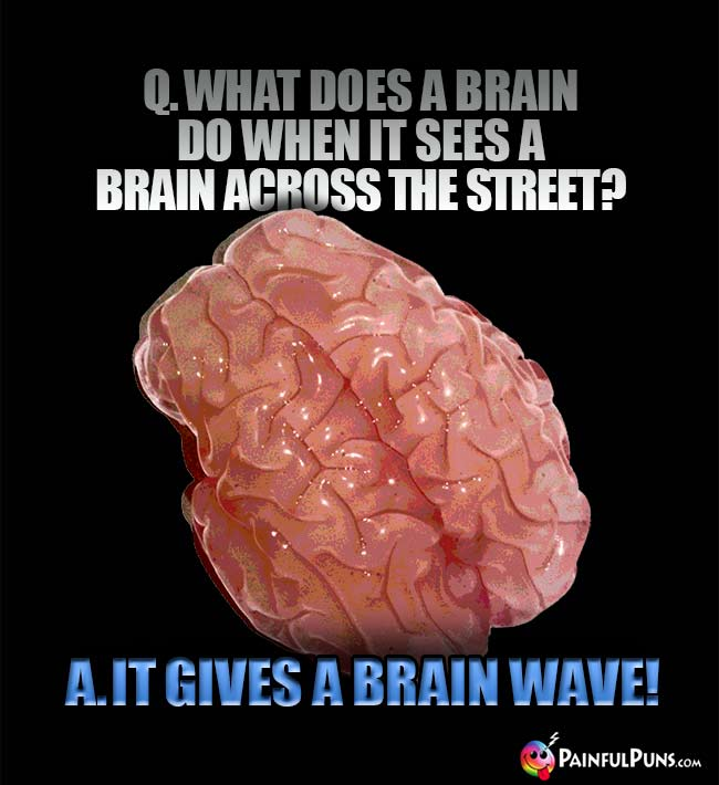 Q. What does a brain do when it sees a brain across the street? A. It gives a brain wave!