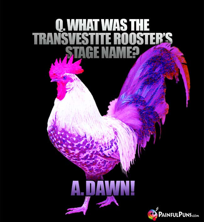 Q. What was teh transvestite rooster's stage name? A. Dawn!