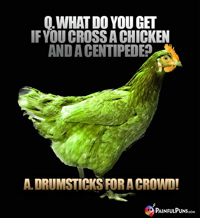Q. What do you get if you cross a chicken and a centipede? A. Drumsticks for a crowd!