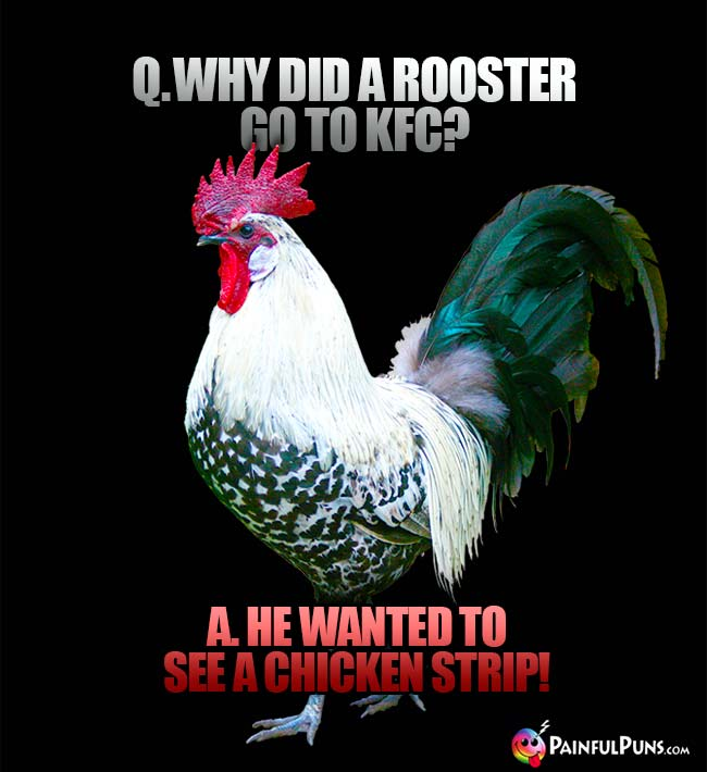 Q. Why did a rooster go to KFC? A. He wanted to see a chicken strip!