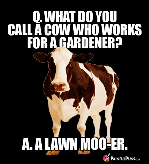 Q. What do you call a cow who works for a gardener? a. A Lawn Moo-er.