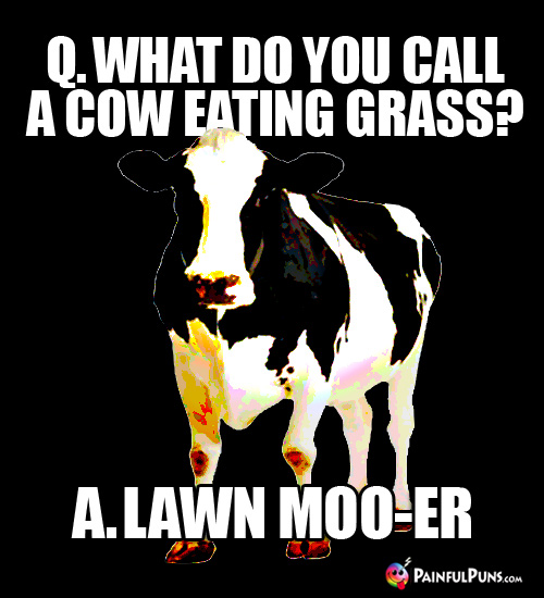 Q. What do you call a cow eating grass? A. Lawn Moo-er