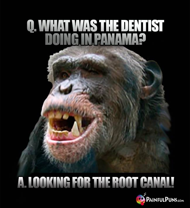 Q. What was the dentist doing in Panama? Al Looking for the root canal!