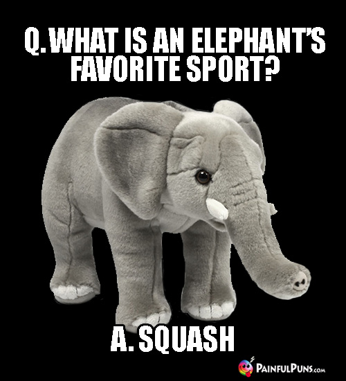 Painful Animal Puns: Q. What is an elephant's favorite sport? A. Squash