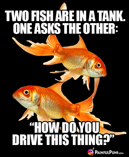 "Two Fish Are in a Tank. One Asks the Other: ""How Do You Drive This Thing?"""