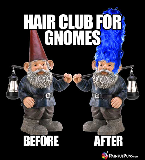 Hair club for gnomes: Before and After