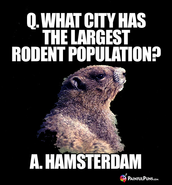Q. What City Has the Largest Rodent Population? A. Hamsterdam