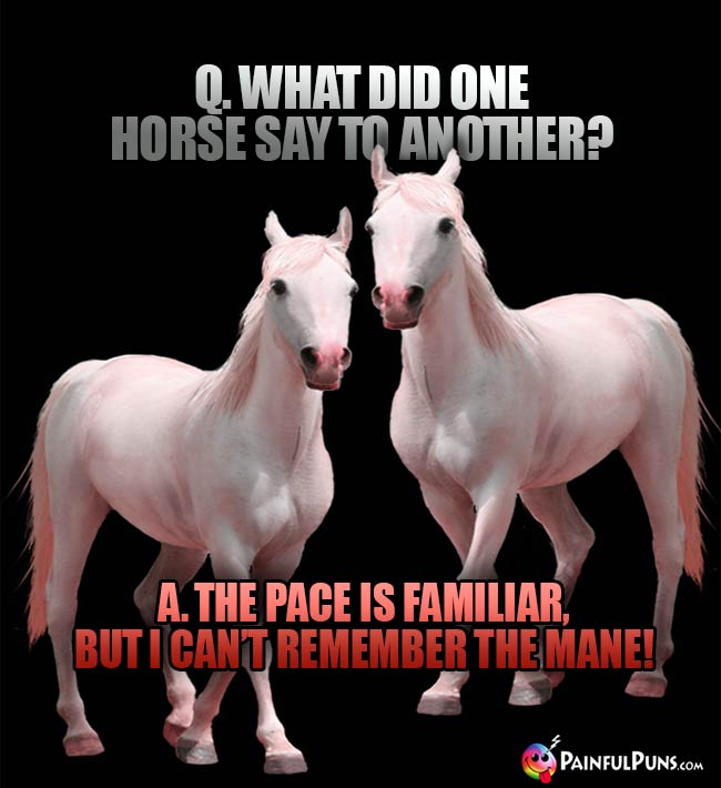 Q. What did one horse say to another? A. The pace is familiar, but I can't remember the mane!