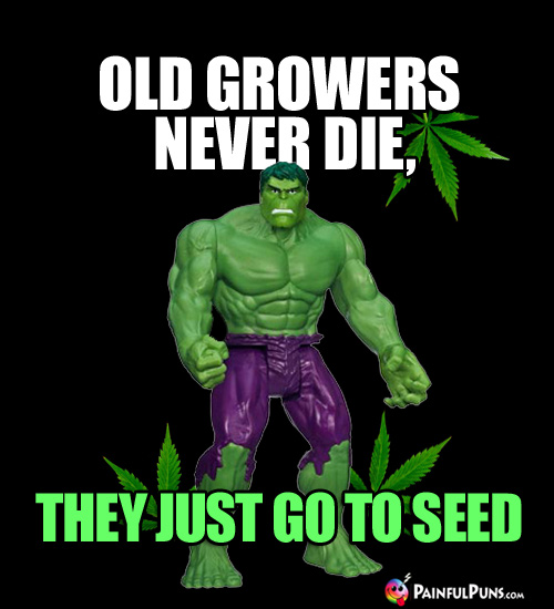 Hulk with Pot Leaves: Old Growers Never Die, They Just Go to Seed