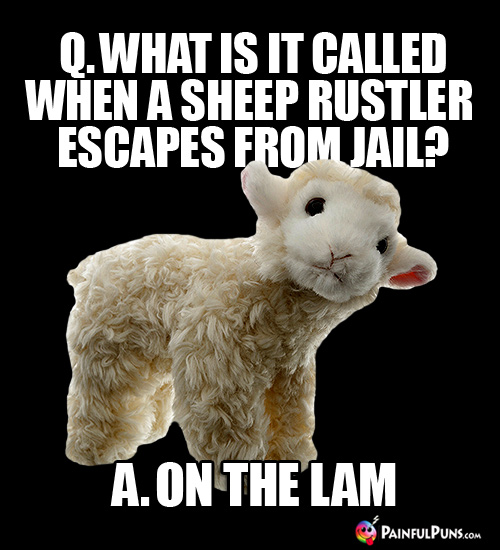 Q. What is it called when a sheep rustler escapes from jail? A. On the Lam