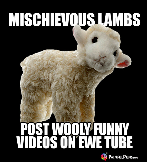 Mischeivous lambs post wooly funny videos on Ewe Tube.