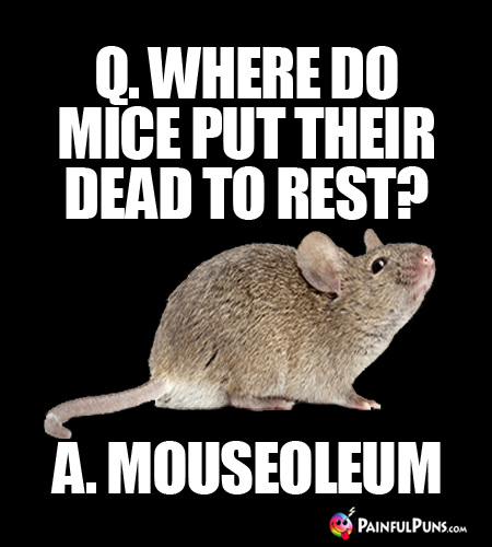 Q. Where do mice put their dead to rest? A. Mouseoleum