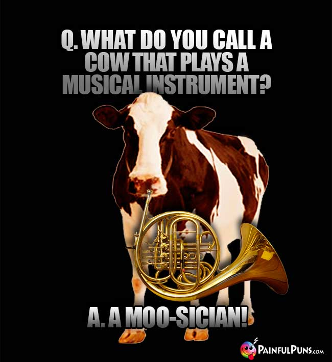Q. What do you call a cow that plays a musical instrument? A. A Moo-Sician!