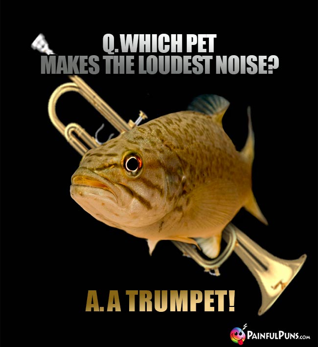 Fish Asks: Which pet makes the loudest noise? A. A Trumpet!