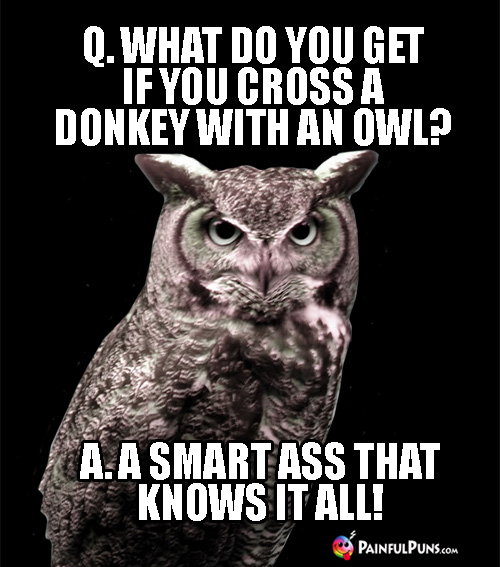 Q. What Do You Get If You Cross a Donkey with an Owl? A. A Smart Ass That Knows It All!