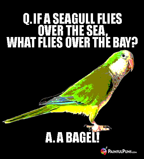 Q. If a seagull flies over the sea, what flies over the bay? A. A Bagel!