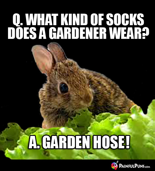 Q. What kind of socks does a gardener wear? A. Garden Hose!