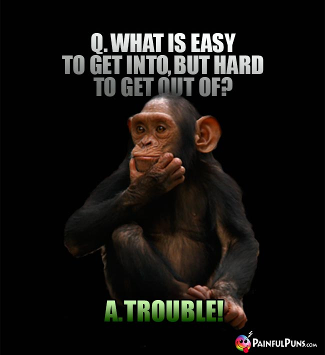 Chimp Asks: What is easy to get into, but hard to get out of? A. Trouble!