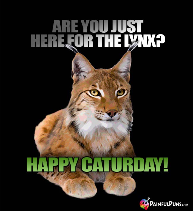 Are you just here for the lynx? Happy Caturday!