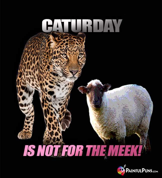 Sheep Says to a Leopard: Caturday is not for the meek!