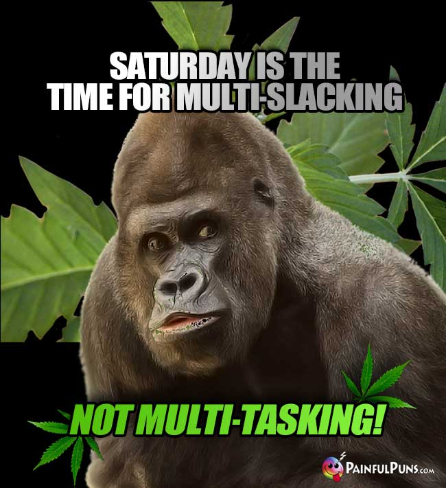 Pothead Gorilla Says: Saturday is the time for multi-slacking, not multi-tasking!