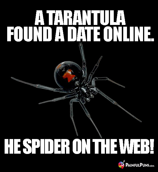 A tarantula found a date online. He spider on the web!