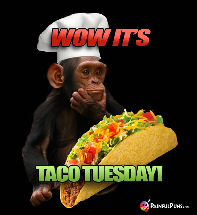 Wow It's Taco Tuesday!