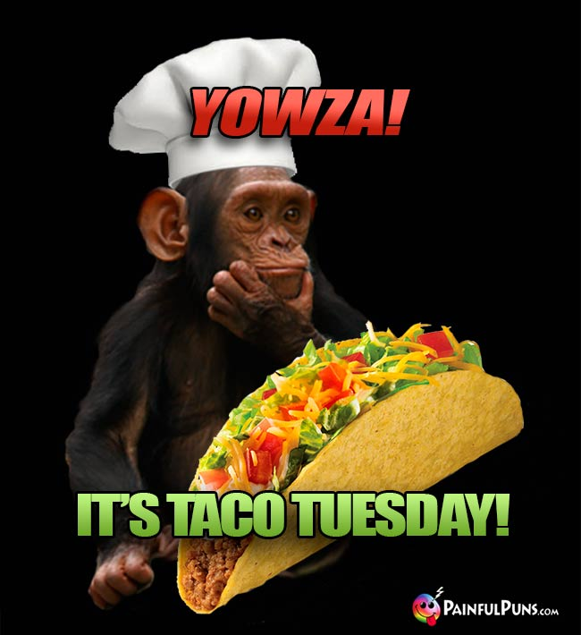 Chimp Chef Says: Yowza! It's Taco Tuesday!