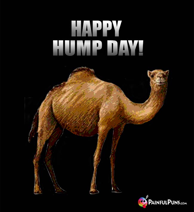 Camel Says: Happy Hump Day!