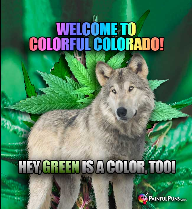 Stoner Wolf Says: Welcome to Colorful Colorado! Hey, GREEN is a color, too!