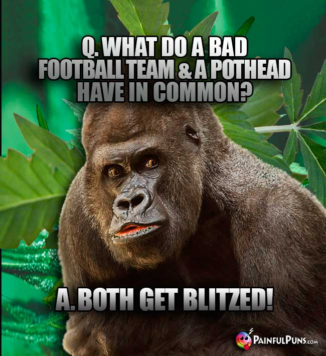 Big Ape Asks: What do a bad football team & a pothead have in common? A. Both get blitzed!