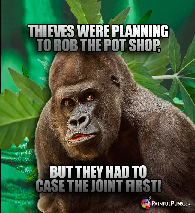 Thieves were planning to rob the pot shop, but they had to case the joint first!